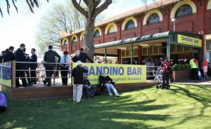 dandino-bar