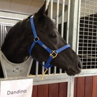 2013 Hong Kong Vase for Dandino
