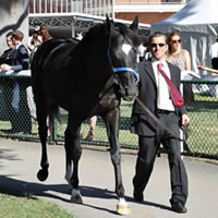 Dandino runs 2nd in 2013 Caulfield Cup