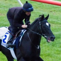 Dandino primed for 2013 Hong Kong Vase