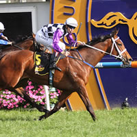 A Star is Born as Amicus takes 2014 Thousand Guineas