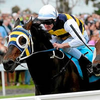 More Than Sacred popular elect for 2014 Geelong Cup