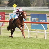 238 nominations for 2014 Ballarat Cup Day