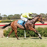 Ticket To Toorak brings in the new year with scorching Terang victory