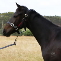 Get involved in a likely Red Arrow filly with Warrnambool trainer Daniel Bowman