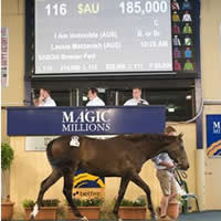 Master of Design colt tops Day 2 of Magic Millions Adelaide Yearling Sale