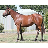 Get involved in this great value Tickets x Play Money colt with ATB & Darren Weir