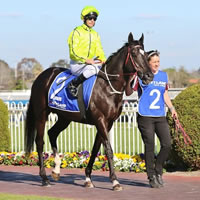 The 'Black Beast' Dandino primed for 2015 Geelong Cup assault