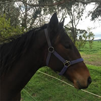 Get involved in a Poet's Voice yearling colt with Matthew Williams Racing
