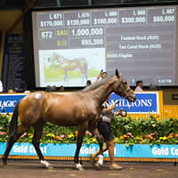 Fastnet to another Million Dollar Lot as records tumble at 2016 Gold Coast Sale