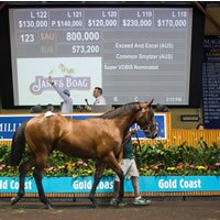 2016 Gold Coast Magic Millions Sales Exceeds and Excels on Day 1