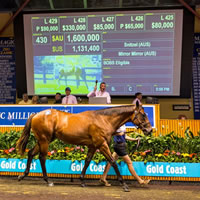 Snitzel tops the menu on Day 2 of the 2016 Gold Coast Magic Millions Sales