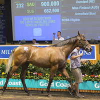 Miss Finland Colt is $900K Dundeel on Day One of 2017 Magic Millions Gold Coast Yearling Sale