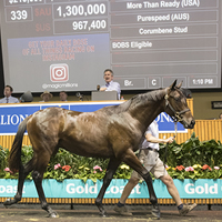 Sebring's full brother sets Day Two of 2017 Magic Millions Sale alight