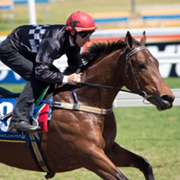 magic millions 2yo catalogue