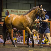 Records smashed on Day Four of 2018 Magic Millions Gold Coast Sale