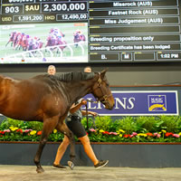 Missrock tops Day One of 2019 Magic Millions National Broodmare Sale